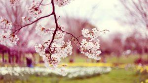 spring-piano-beethoven