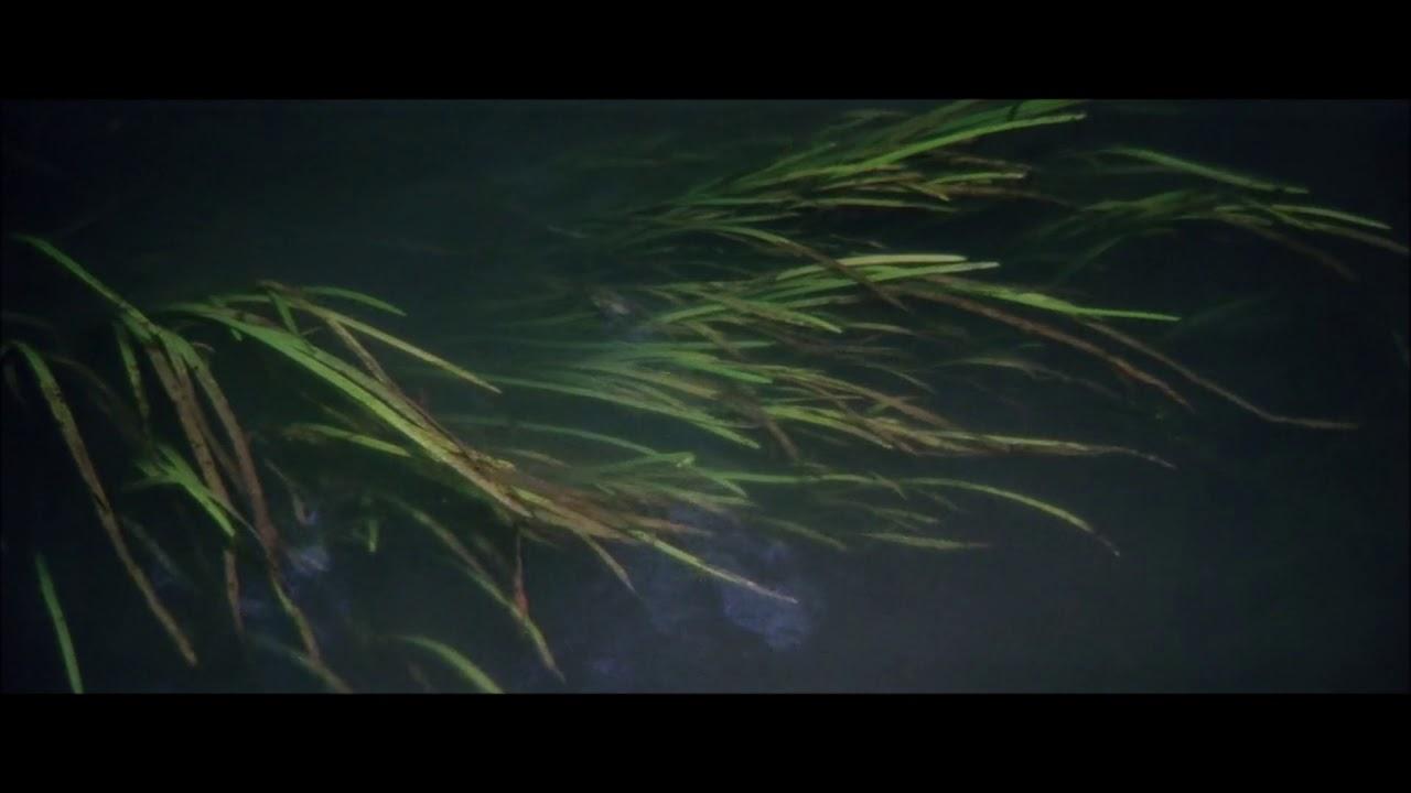 : TARKOVSKY – SOLARIS   BACH - Coral Ich ruf zu dir Jesu Christ (II)